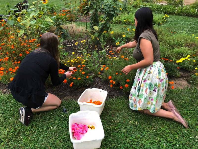 Students in Tyler's Fibers & Material Studies Program collect flowers from the Natural Dye Garden in Tyler's courtyard to create their own sustainable materials.